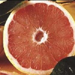 oranges-and-grapefruit-will-start-around-mid-November